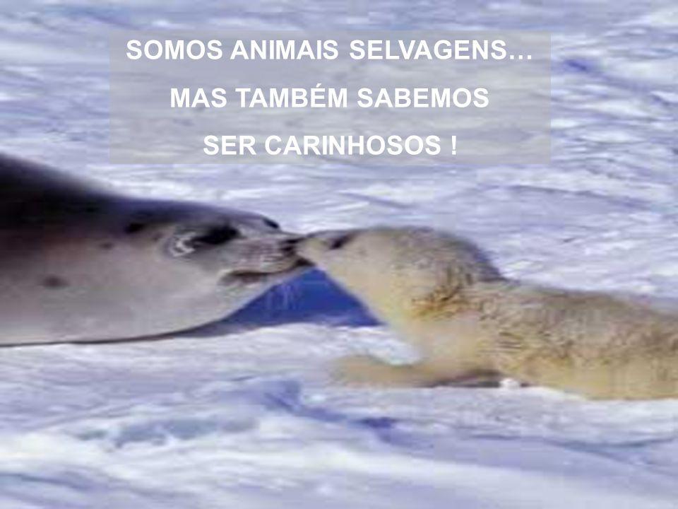 SOMOS ANIMAIS SELVAGENS… MAS TAMBÉM SABEMOS SER CARINHOSOS !