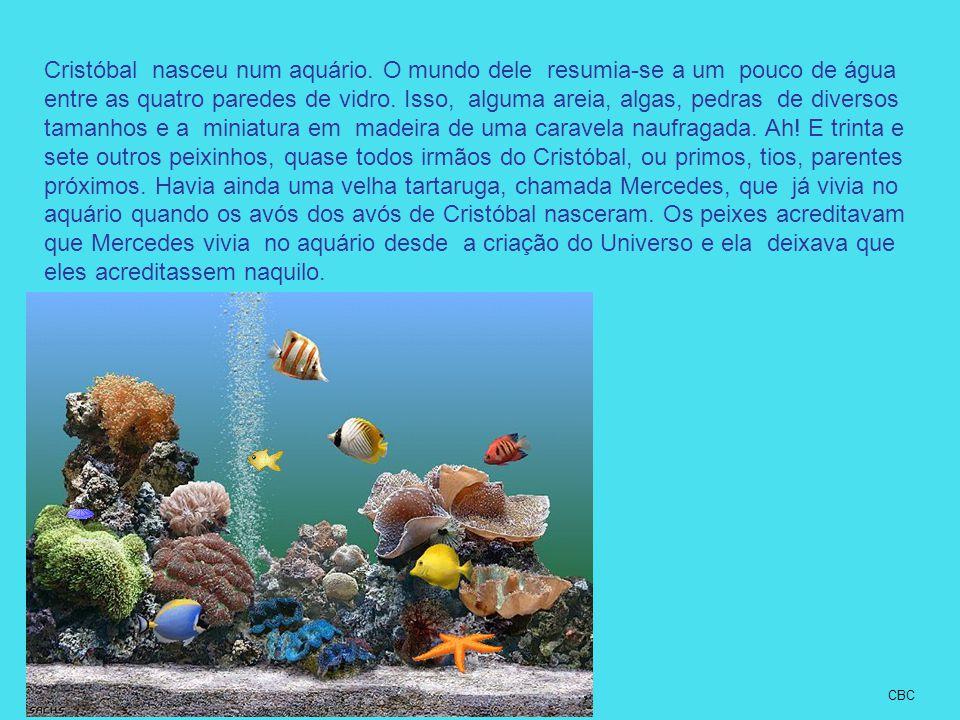 Cristóbal nasceu num aquário. O mundo dele resumia-se a um pouco de água entre as quatro paredes de vidro. Isso, alguma areia, algas, pedras de divers
