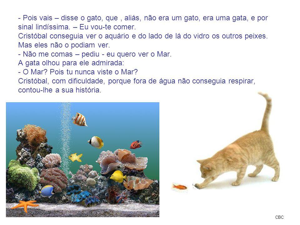 - Pois vais – disse o gato, que, aliás, não era um gato, era uma gata, e por sinal lindíssima. – Eu vou-te comer. Cristóbal conseguia ver o aquário e