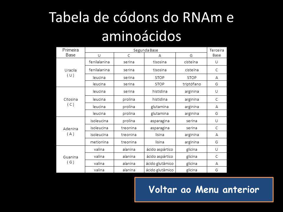 Tabela de códons do RNAm e aminoácidos Voltar ao Menu anterior Primeira Base Segunda Base Terceira Base UCAG Uracila ( U ) fenilalaninaserinatisosinac
