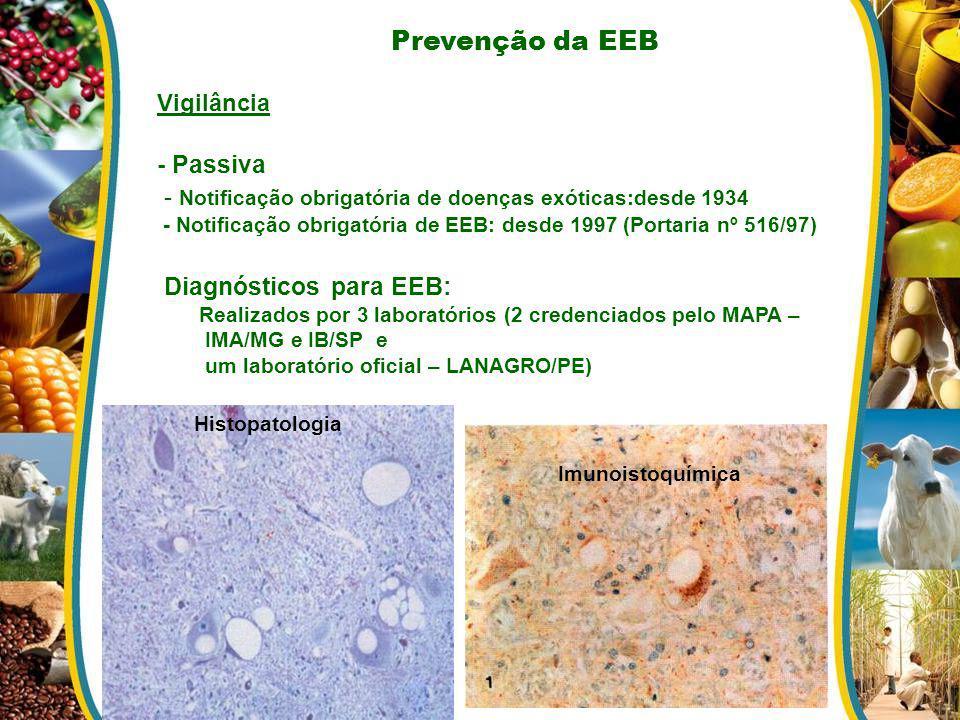 Prevenção da EEB Vigilância - Passiva - Notificação obrigatória de doenças exóticas:desde 1934 - Notificação obrigatória de EEB: desde 1997 (Portaria
