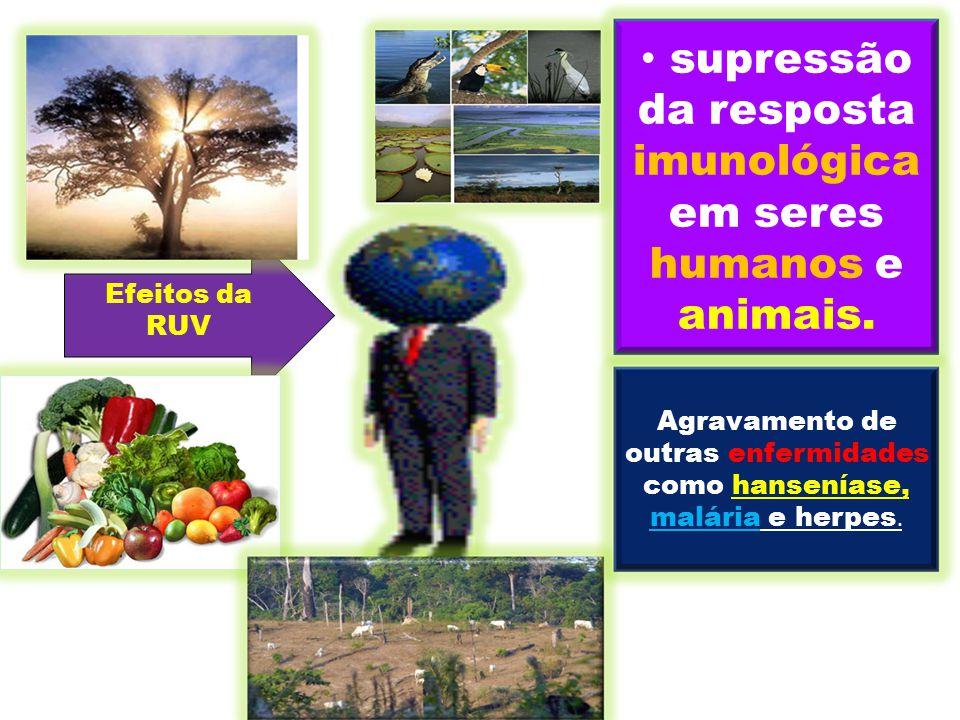Efeitos da RUV supressão da resposta imunológica em seres humanos e animais. Agravamento de outras enfermidades como hanseníase, malária e herpes.
