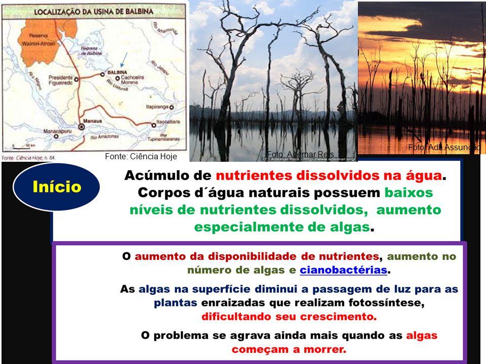Foto: Ada Assunção Foto: Ademar Reis Fonte: Ciência Hoje
