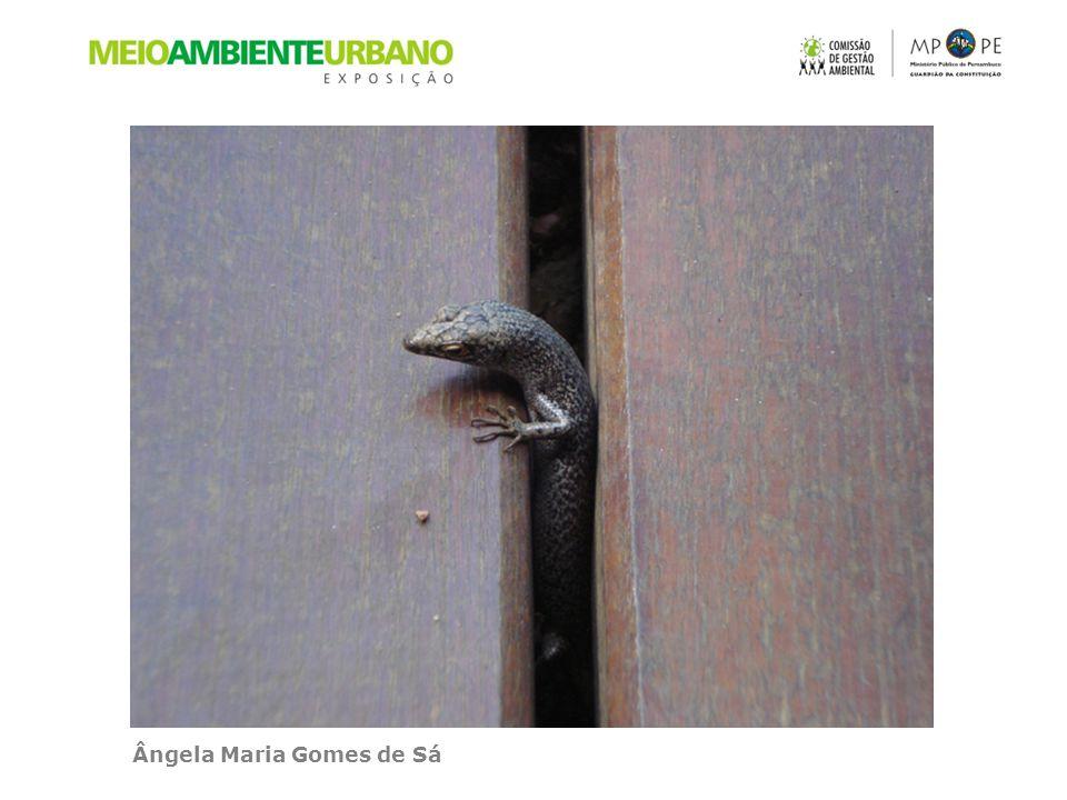 Ângela Maria Gomes de Sá