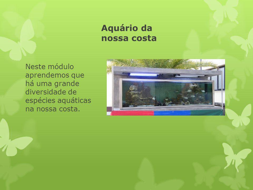 Aquário da nossa costa Neste módulo aprendemos que há uma grande diversidade de espécies aquáticas na nossa costa.