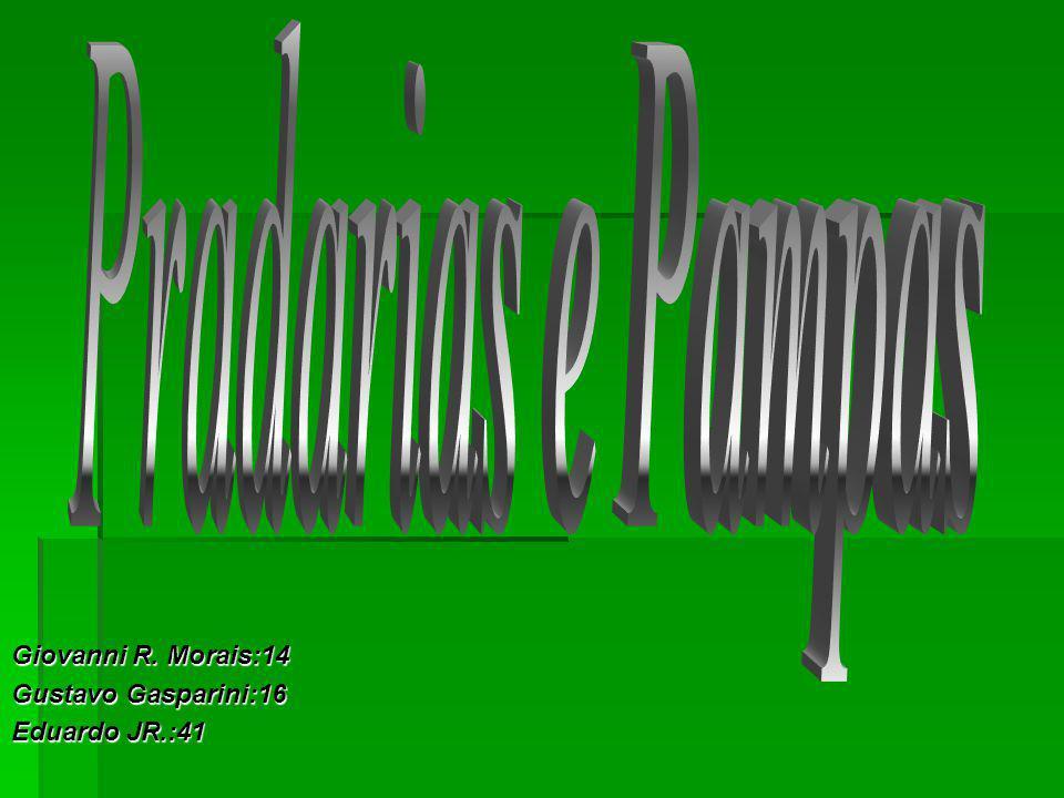 relevo relevo Pradarias ou relvado, ou pampas Tem uma planície vasta e aberta onde não há sinal de árvores nem arbustos, com capim baixo e em abundância.