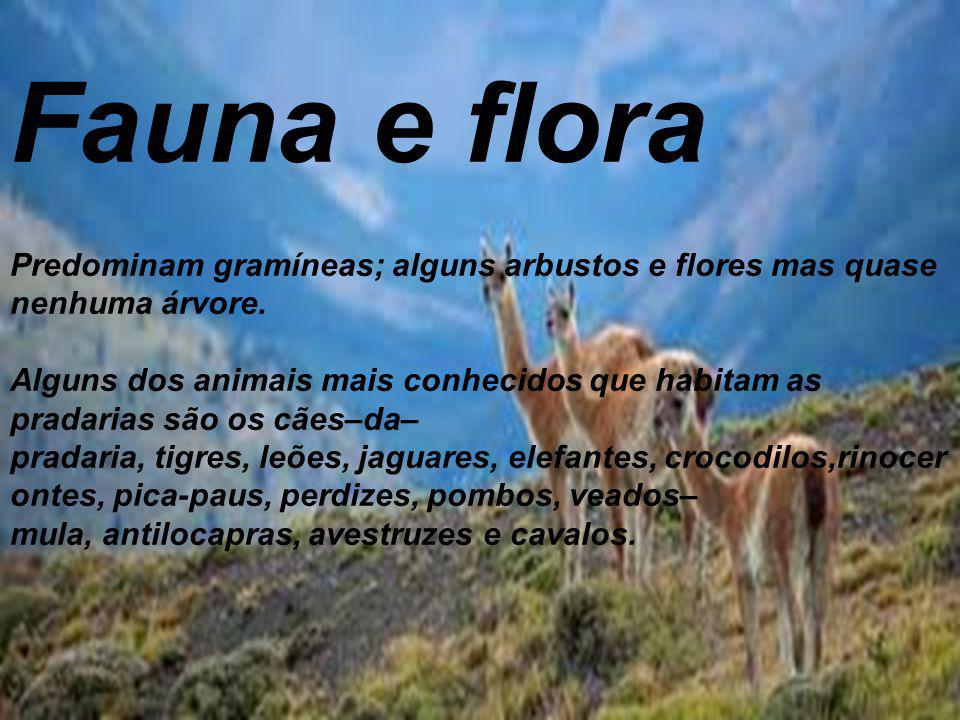 Fauna e flora Predominam gramíneas; alguns arbustos e flores mas quase nenhuma árvore. Alguns dos animais mais conhecidos que habitam as pradarias são