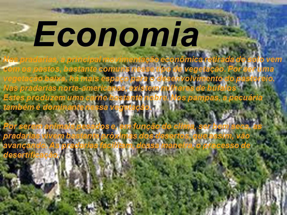 Economia Nas pradarias, a principal movimentação econômica retirada do solo vem com os pastos, bastante comuns nesse tipo de vegetação. Por ser uma ve