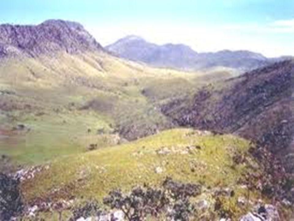 Economia Nas pradarias, a principal movimentação econômica retirada do solo vem com os pastos, bastante comuns nesse tipo de vegetação.