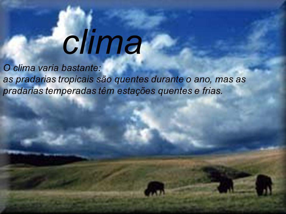 Na América do Sul, as pradarias, localizadas na Argentina, Uruguai e no estado do Rio Grande do Sul (no Brasil), também são chamadas de pampas.