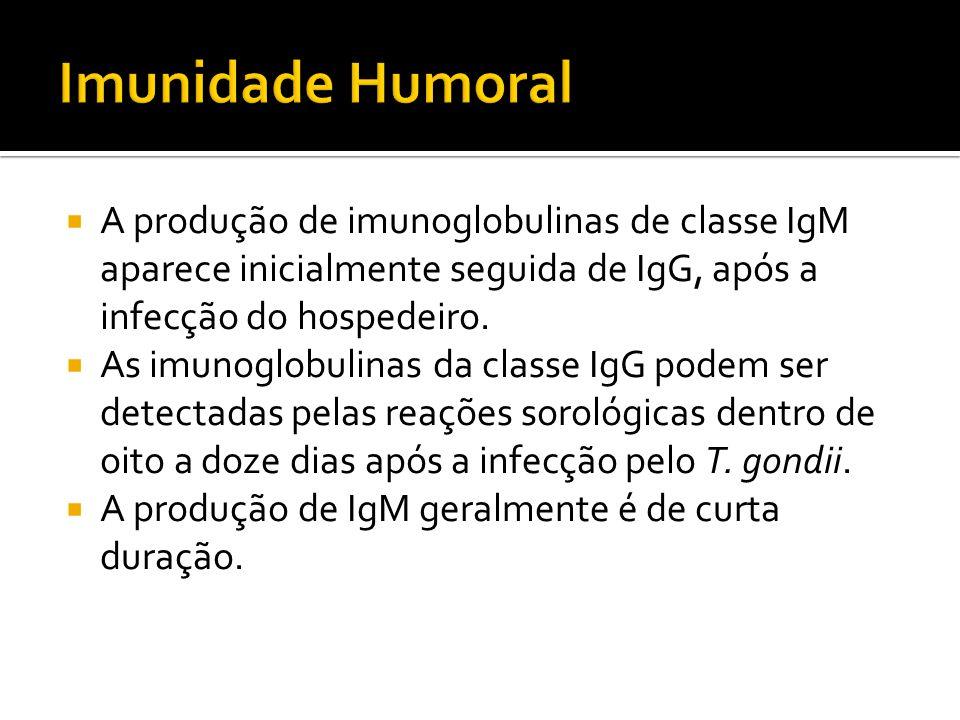 A produção de imunoglobulinas de classe IgM aparece inicialmente seguida de IgG, após a infecção do hospedeiro.