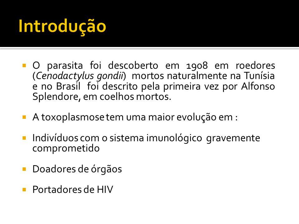 O parasita foi descoberto em 1908 em roedores (Cenodactylus gondii) mortos naturalmente na Tunísia e no Brasil foi descrito pela primeira vez por Alfonso Splendore, em coelhos mortos.