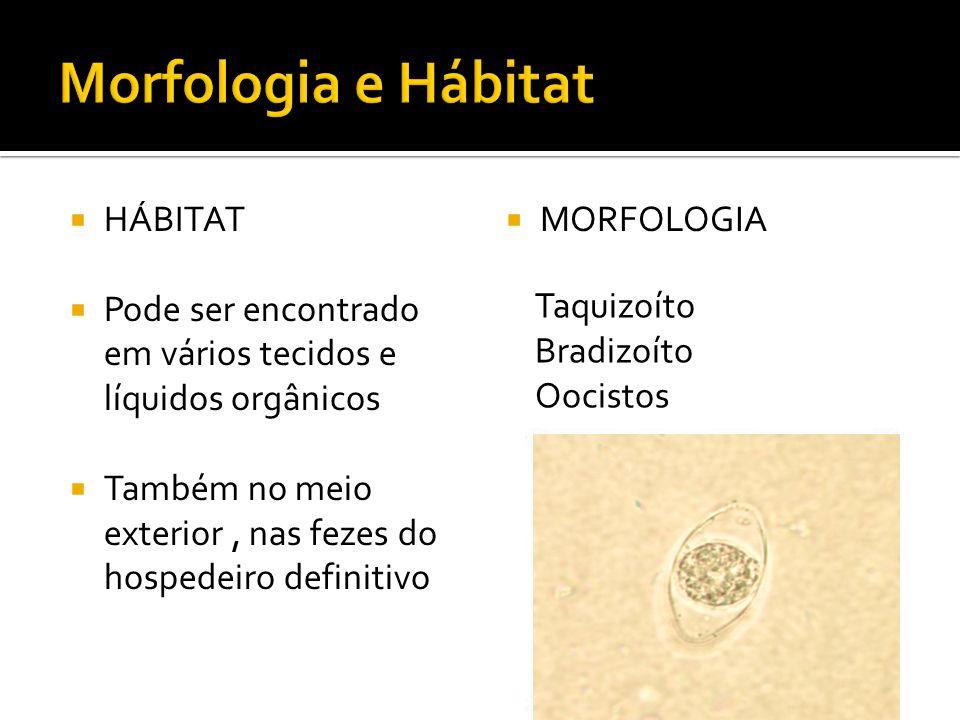 HÁBITAT Pode ser encontrado em vários tecidos e líquidos orgânicos Também no meio exterior, nas fezes do hospedeiro definitivo MORFOLOGIA Taquizoíto Bradizoíto Oocistos