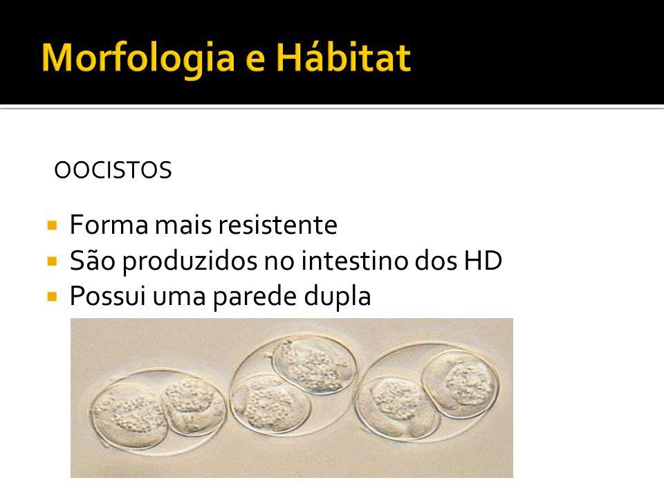 Forma mais resistente São produzidos no intestino dos HD Possui uma parede dupla OOCISTOS