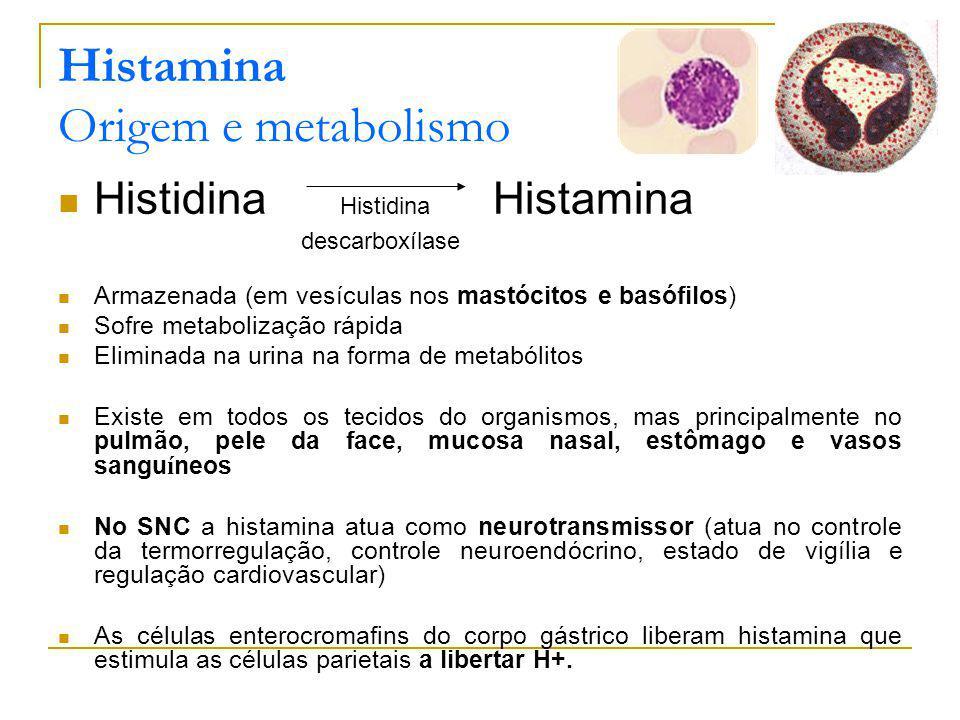 Histamina Origem e metabolismo Histidina Histamina Armazenada (em vesículas nos mastócitos e basófilos) Sofre metabolização rápida Eliminada na urina na forma de metabólitos Existe em todos os tecidos do organismos, mas principalmente no pulmão, pele da face, mucosa nasal, estômago e vasos sangu í neos No SNC a histamina atua como neurotransmissor (atua no controle da termorregulação, controle neuroendócrino, estado de vigília e regulação cardiovascular) As células enterocromafins do corpo gástrico liberam histamina que estimula as células parietais a libertar H+.