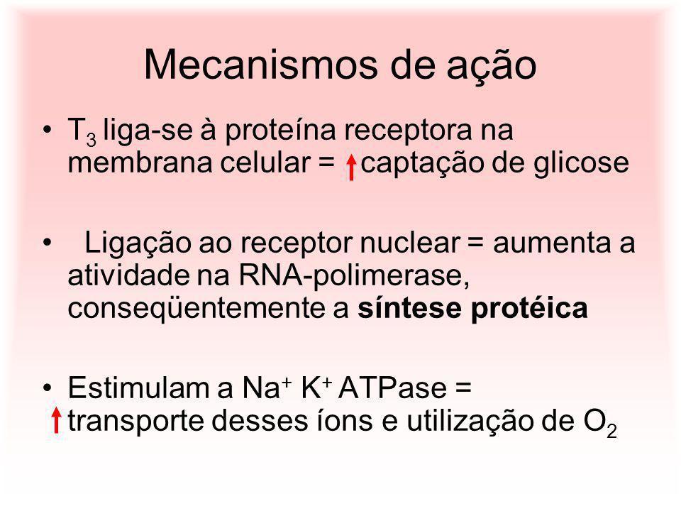 Mecanismos de ação T 3 liga-se à proteína receptora na membrana celular = captação de glicose Ligação ao receptor nuclear = aumenta a atividade na RNA