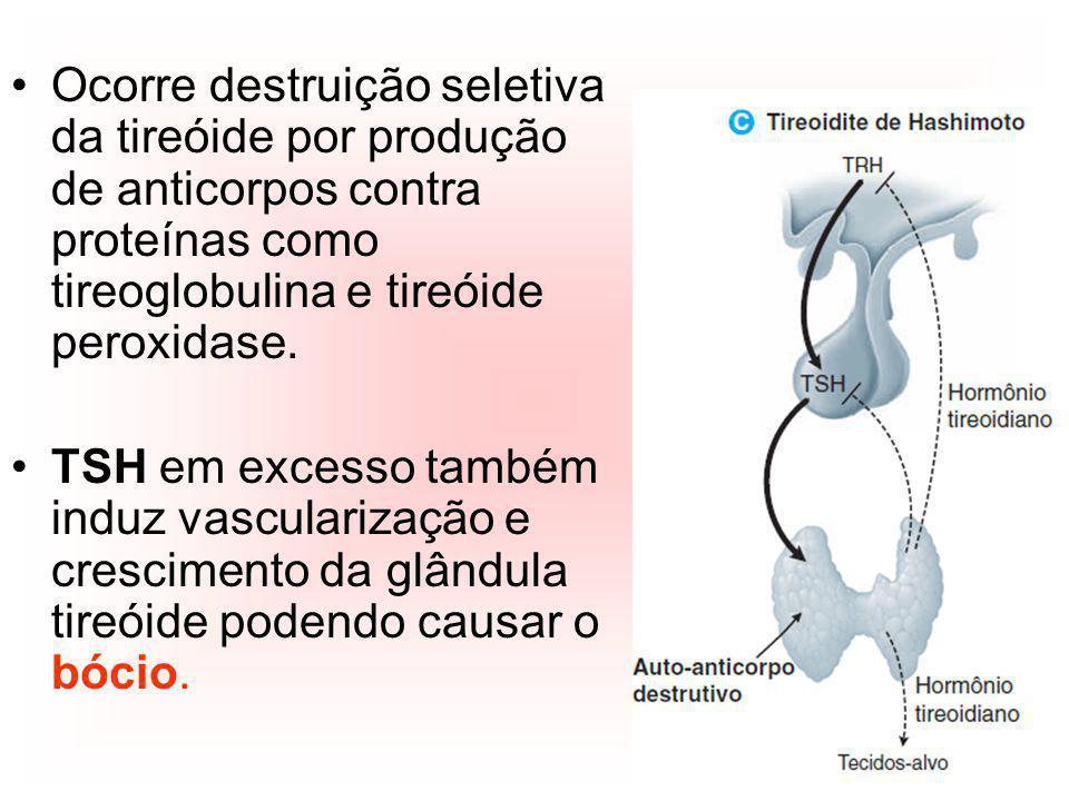 Ocorre destruição seletiva da tireóide por produção de anticorpos contra proteínas como tireoglobulina e tireóide peroxidase. TSH em excesso também in