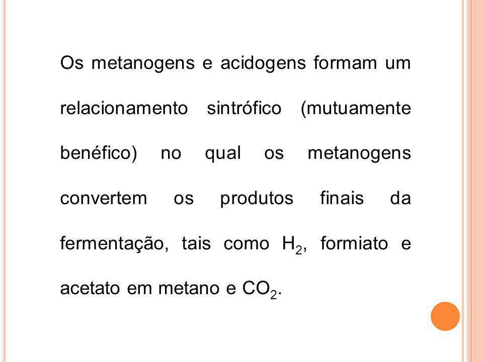 Os metanogens e acidogens formam um relacionamento sintrófico (mutuamente benéfico) no qual os metanogens convertem os produtos finais da fermentação,