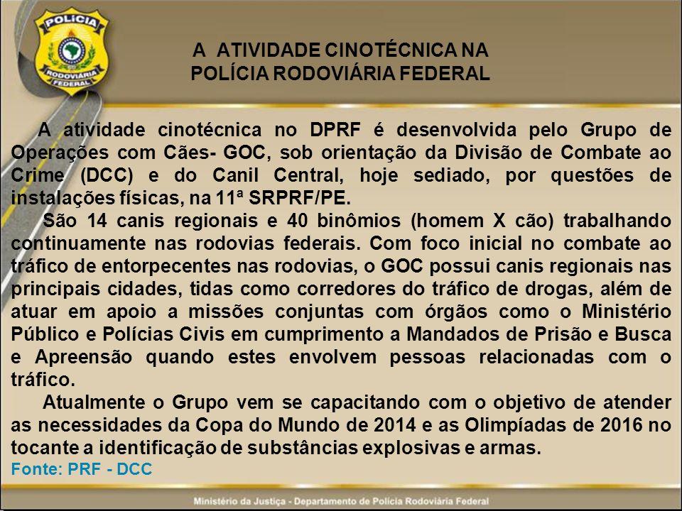 A ATIVIDADE CINOTÉCNICA NA POLÍCIA RODOVIÁRIA FEDERAL A atividade cinotécnica no DPRF é desenvolvida pelo Grupo de Operações com Cães- GOC, sob orient