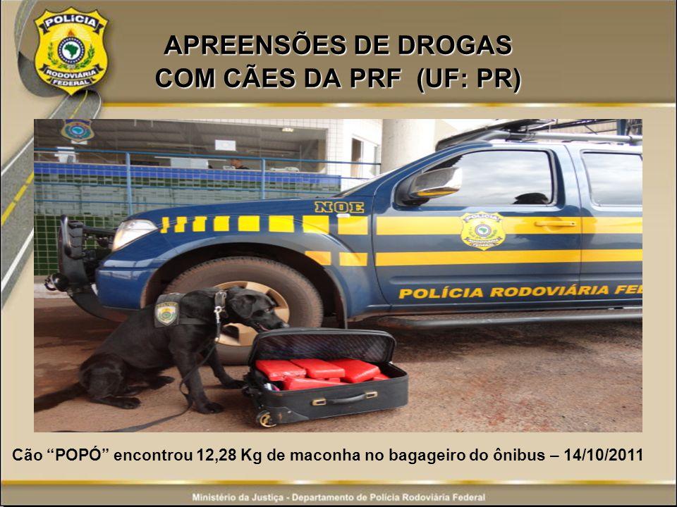APREENSÕES DE DROGAS COM CÃES DA PRF (UF: PR) Cão POPÓ encontrou 12,28 Kg de maconha no bagageiro do ônibus – 14/10/2011