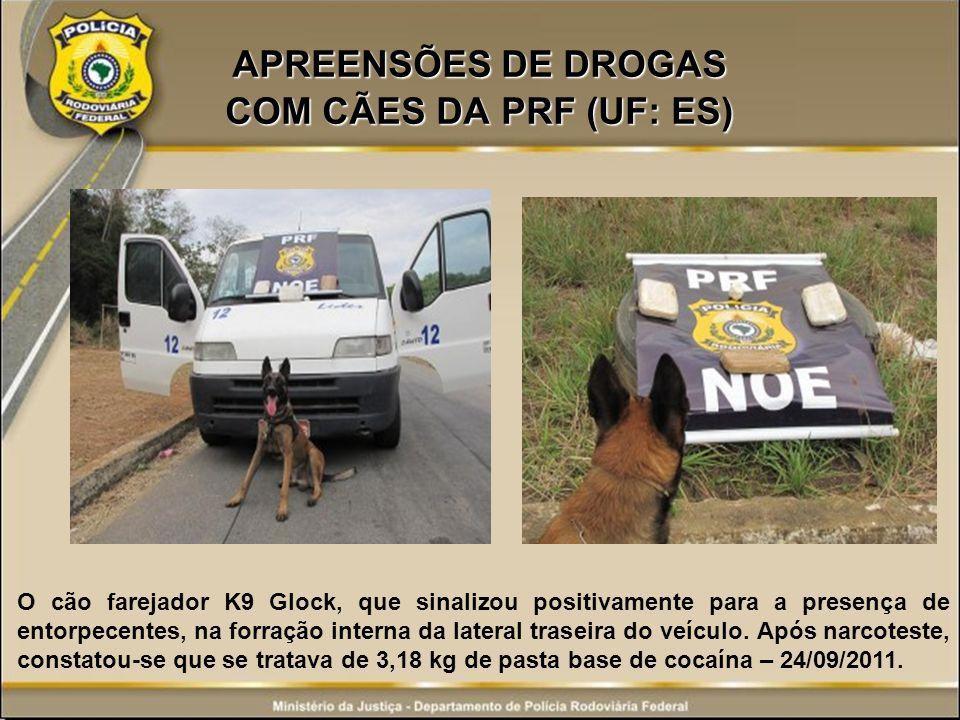 APREENSÕES DE DROGAS COM CÃES DA PRF (UF: ES) O cão farejador K9 Glock, que sinalizou positivamente para a presença de entorpecentes, na forração inte