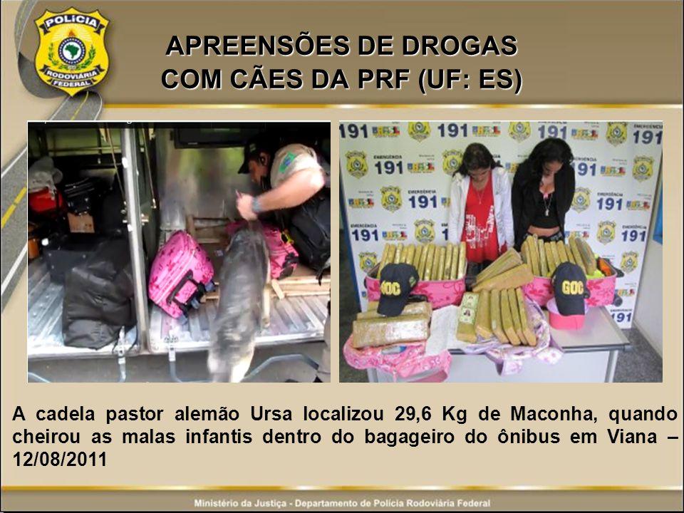 APREENSÕES DE DROGAS COM CÃES DA PRF (UF: ES) A cadela pastor alemão Ursa localizou 29,6 Kg de Maconha, quando cheirou as malas infantis dentro do bag