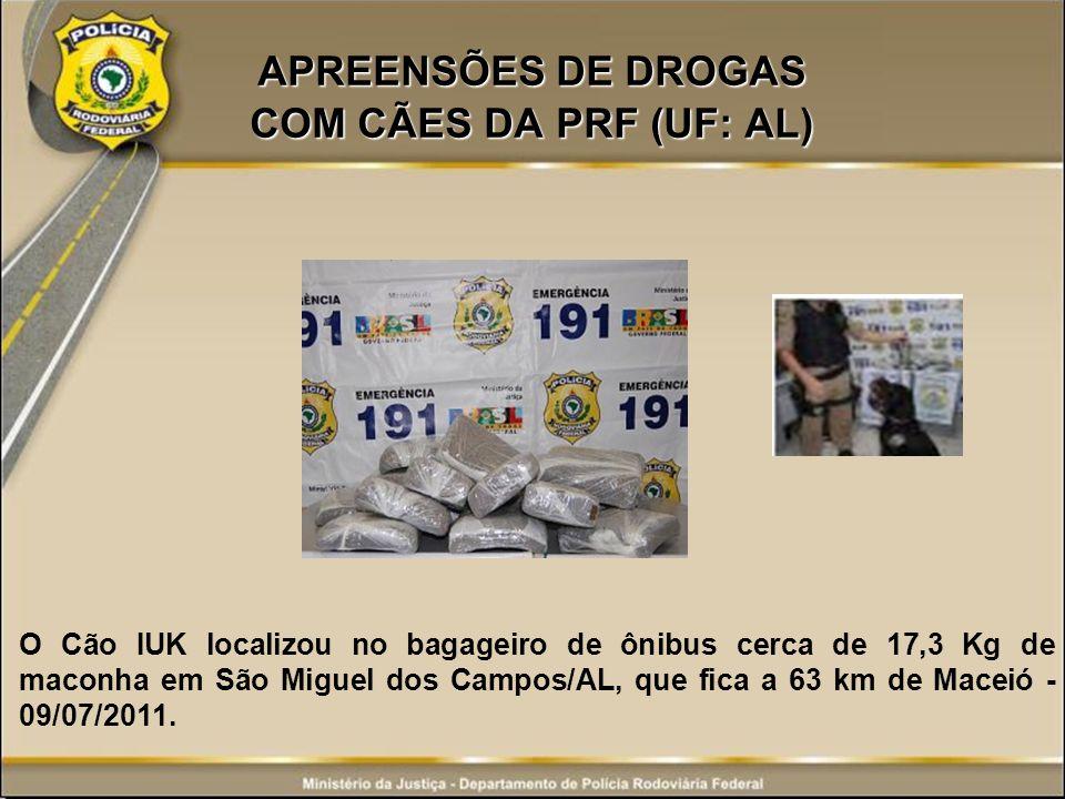 APREENSÕES DE DROGAS COM CÃES DA PRF (UF: AL) O Cão IUK localizou no bagageiro de ônibus cerca de 17,3 Kg de maconha em São Miguel dos Campos/AL, que