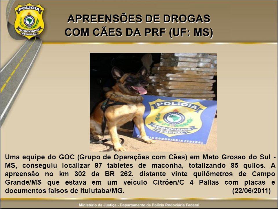 APREENSÕES DE DROGAS COM CÃES DA PRF (UF: MS) Uma equipe do GOC (Grupo de Operações com Cães) em Mato Grosso do Sul - MS, conseguiu localizar 97 table