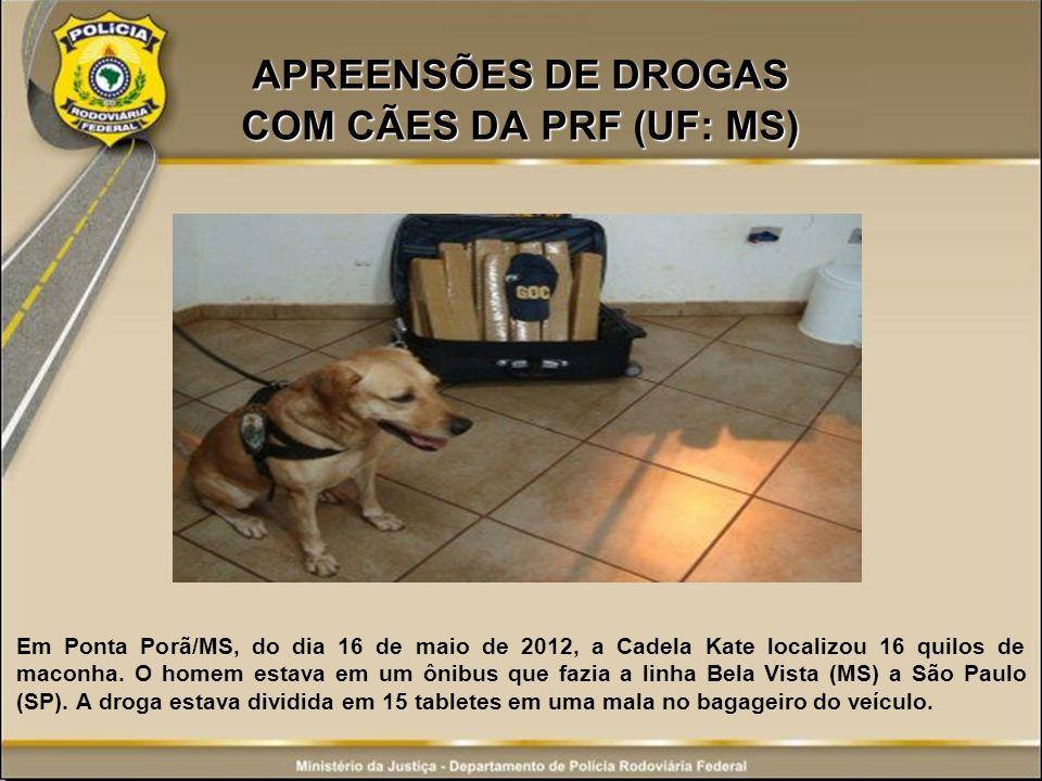 APREENSÕES DE DROGAS COM CÃES DA PRF (UF: MS) Em Ponta Porã/MS, do dia 16 de maio de 2012, a Cadela Kate localizou 16 quilos de maconha. O homem estav