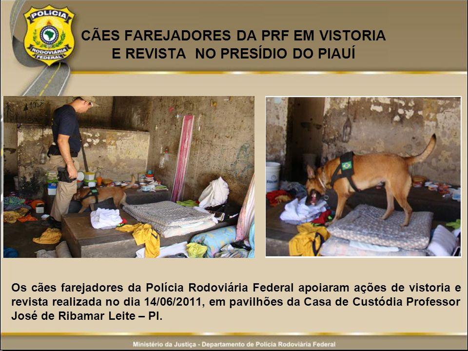 CÃES FAREJADORES DA PRF EM VISTORIA E REVISTA NO PRESÍDIO DO PIAUÍ Os cães farejadores da Polícia Rodoviária Federal apoiaram ações de vistoria e revi