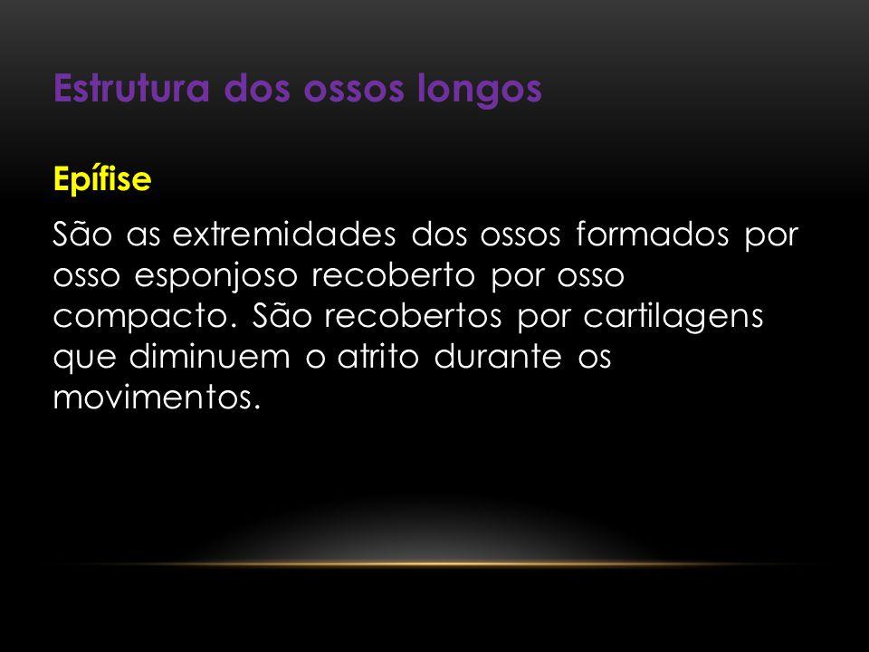 Estrutura dos ossos longos Epífise São as extremidades dos ossos formados por osso esponjoso recoberto por osso compacto. São recobertos por cartilage