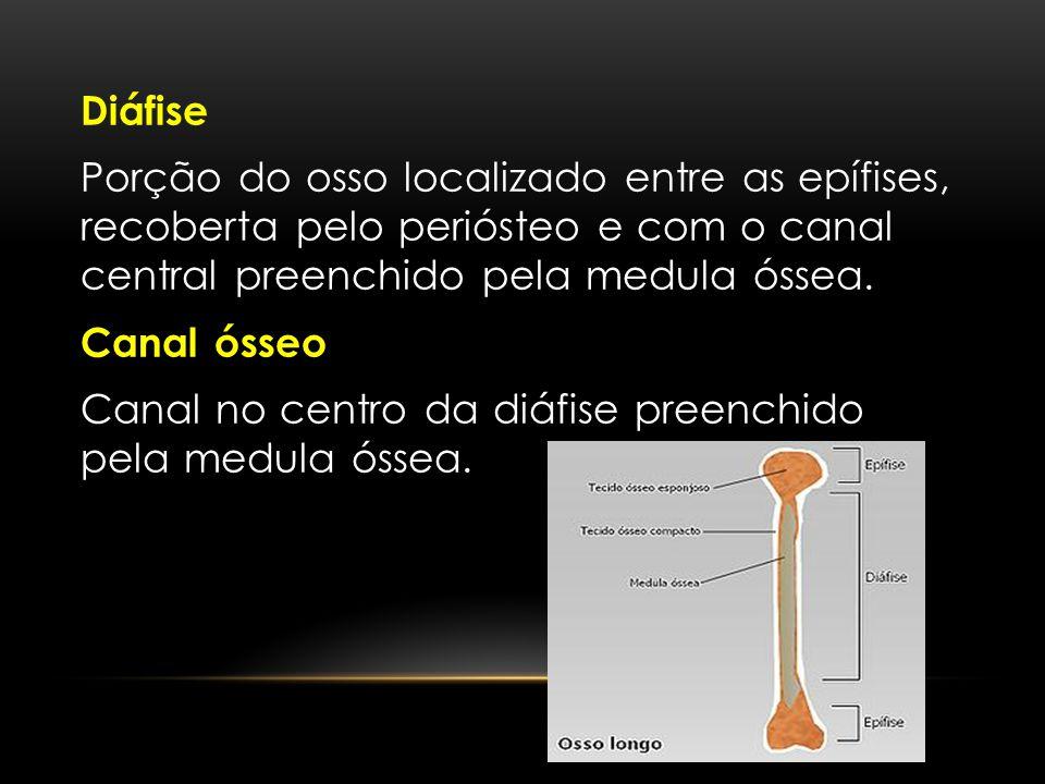 Diáfise Porção do osso localizado entre as epífises, recoberta pelo periósteo e com o canal central preenchido pela medula óssea. Canal ósseo Canal no