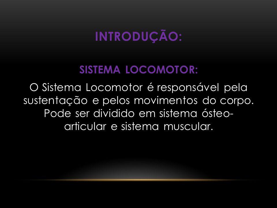INTRODUÇÃO: SISTEMA LOCOMOTOR: O Sistema Locomotor é responsável pela sustentação e pelos movimentos do corpo. Pode ser dividido em sistema ósteo- art