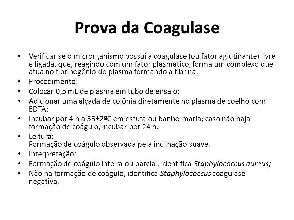 Prova da Coagulase Verificar se o microrganismo possui a coagulase (ou fator aglutinante) livre e ligada, que, reagindo com um fator plasmático, forma