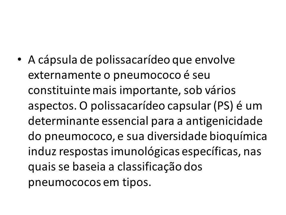 A cápsula de polissacarídeo que envolve externamente o pneumococo é seu constituinte mais importante, sob vários aspectos. O polissacarídeo capsular (