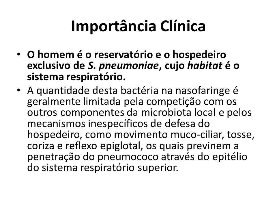Importância Clínica O homem é o reservatório e o hospedeiro exclusivo de S. pneumoniae, cujo habitat é o sistema respiratório. A quantidade desta bact