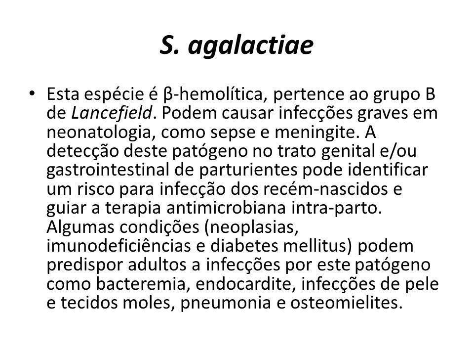S. agalactiae Esta espécie é β-hemolítica, pertence ao grupo B de Lancefield. Podem causar infecções graves em neonatologia, como sepse e meningite. A