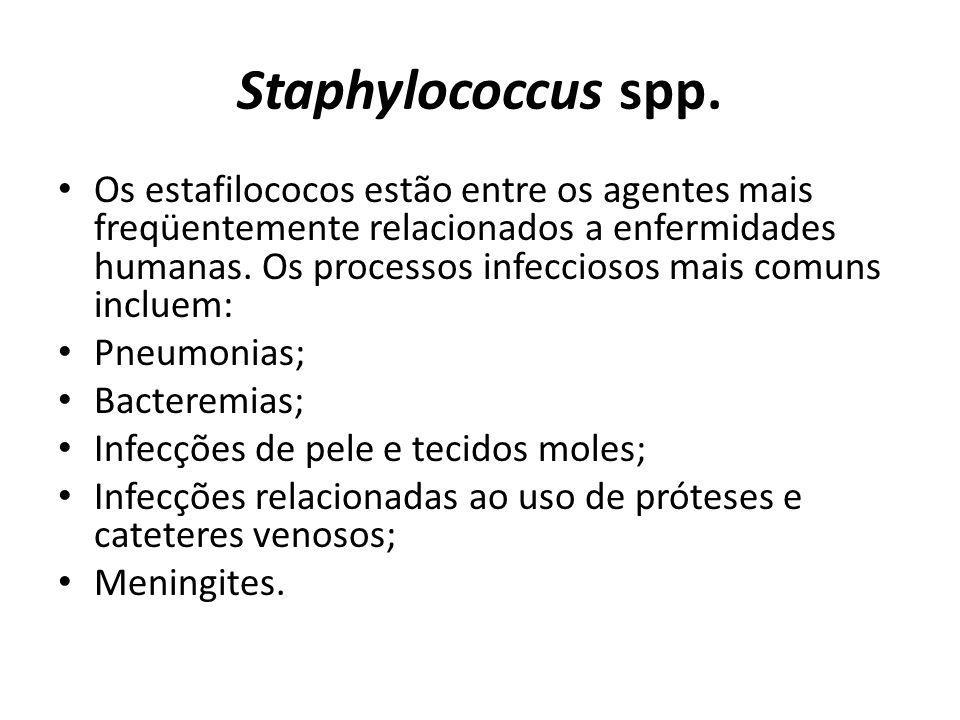 Staphylococcus spp. Os estafilococos estão entre os agentes mais freqüentemente relacionados a enfermidades humanas. Os processos infecciosos mais com