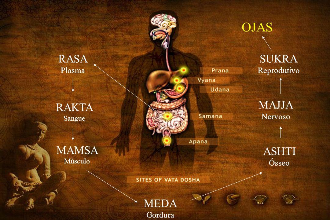 RASA Plasma RAKTA Sangue MAMSA Músculo MEDA Gordura ASHTI Ósseo MAJJA Nervoso SUKRA Reprodutivo OJAS