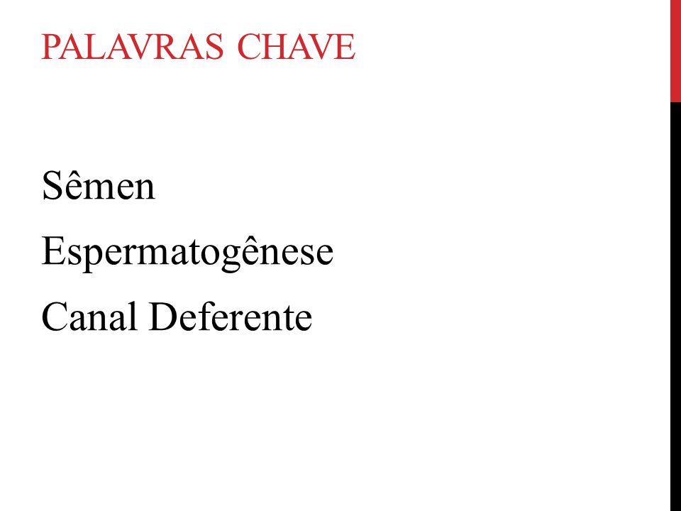 PALAVRAS CHAVE Sêmen Espermatogênese Canal Deferente