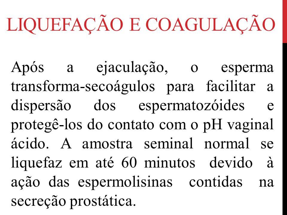 LIQUEFAÇÃO E COAGULAÇÃO Após a ejaculação, o esperma transforma-secoágulos para facilitar a dispersão dos espermatozóides e protegê-los do contato com