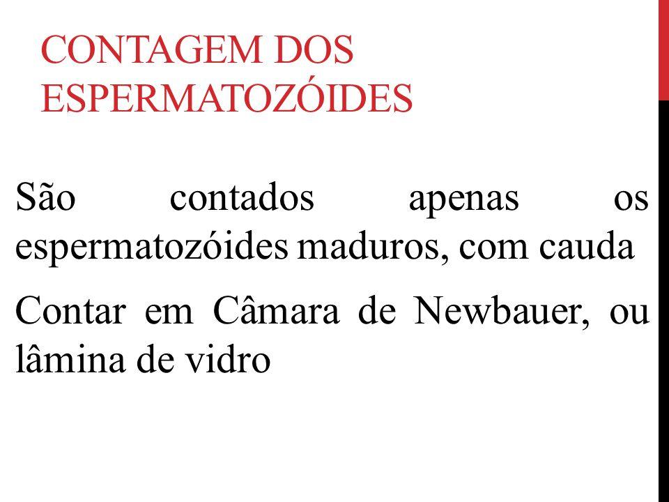CONTAGEM DOS ESPERMATOZÓIDES São contados apenas os espermatozóides maduros, com cauda Contar em Câmara de Newbauer, ou lâmina de vidro