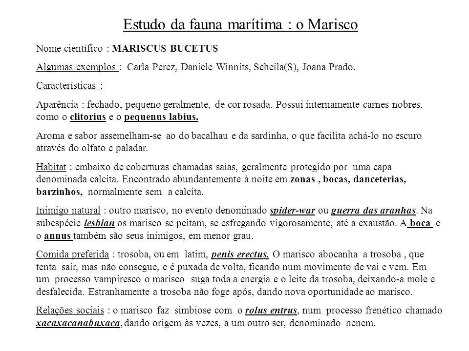 Estudo da fauna marítima : o Marisco Nome científico : MARISCUS BUCETUS Algumas exemplos : Carla Perez, Daniele Winnits, Scheila(S), Joana Prado. Cara