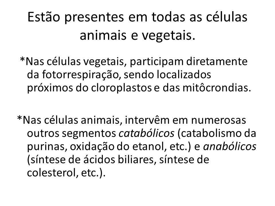 Estão presentes em todas as células animais e vegetais. *Nas células vegetais, participam diretamente da fotorrespiração, sendo localizados próximos d