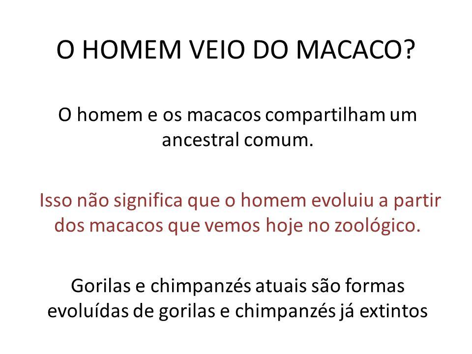 O HOMEM VEIO DO MACACO? O homem e os macacos compartilham um ancestral comum. Isso não significa que o homem evoluiu a partir dos macacos que vemos ho