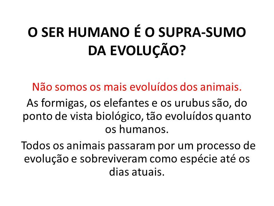 O SER HUMANO É O SUPRA-SUMO DA EVOLUÇÃO? Não somos os mais evoluídos dos animais. As formigas, os elefantes e os urubus são, do ponto de vista biológi