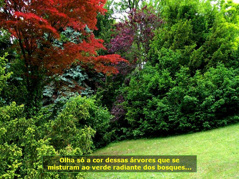 A obra Divina estampada em árvores e plantas, de cores e beleza exuberantes...