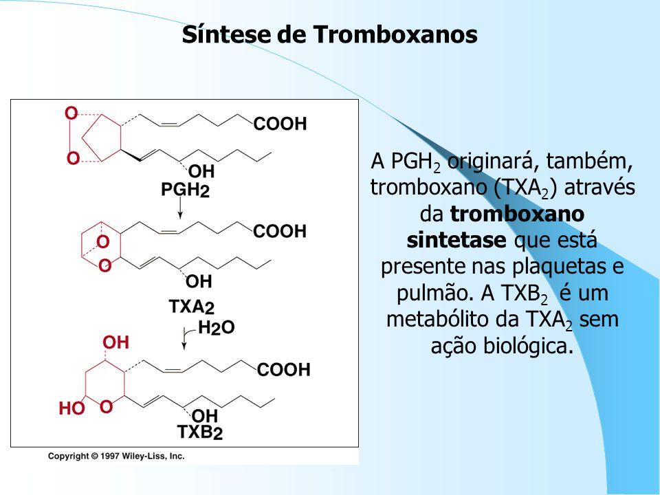 A PGH 2 originará, também, tromboxano (TXA 2 ) através da tromboxano sintetase que está presente nas plaquetas e pulmão. A TXB 2 é um metabólito da TX