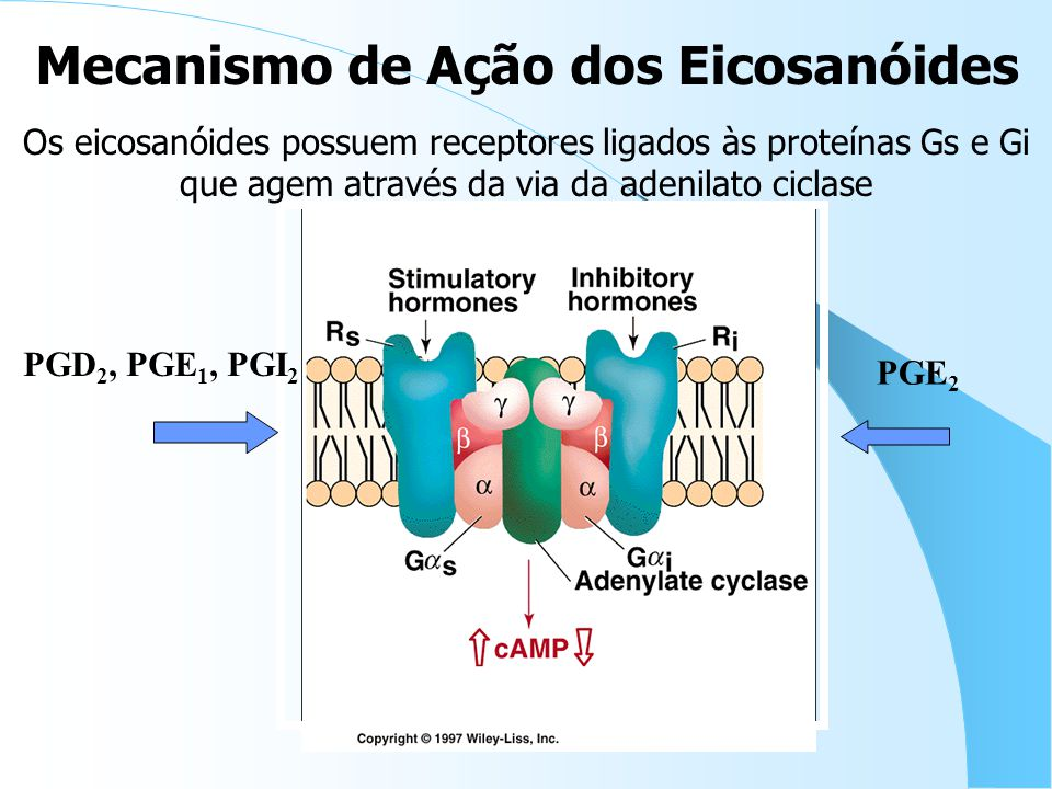 Os eicosanóides possuem receptores ligados às proteínas Gs e Gi que agem através da via da adenilato ciclase Mecanismo de Ação dos Eicosanóides PGD 2, PGE 1, PGI 2 PGE 2