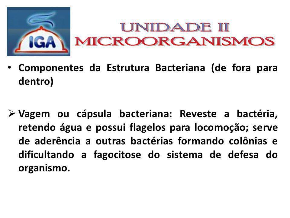 Componentes da Estrutura Bacteriana (de fora para dentro) Parede bacteriana: Estrutura rígida que pode ser reconhecida através da tintura do Gram.